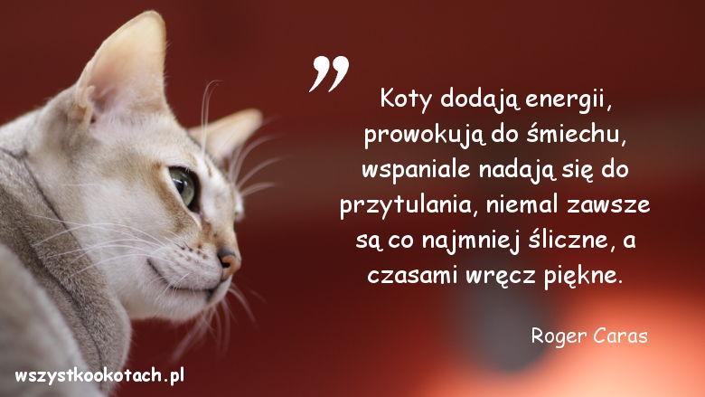 Cytaty o kotach - Roger Caras