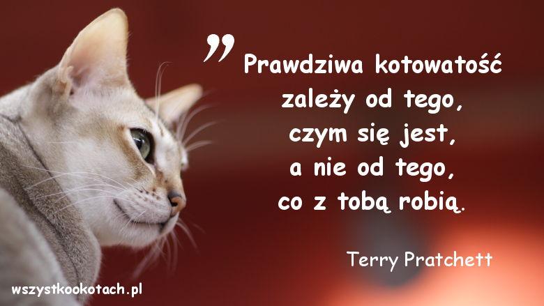 Cytaty o kotach – Terry Pratchett