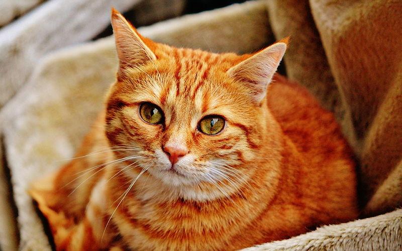 Jak pomóc kotu zaaklimatyzować się w nowym domu?