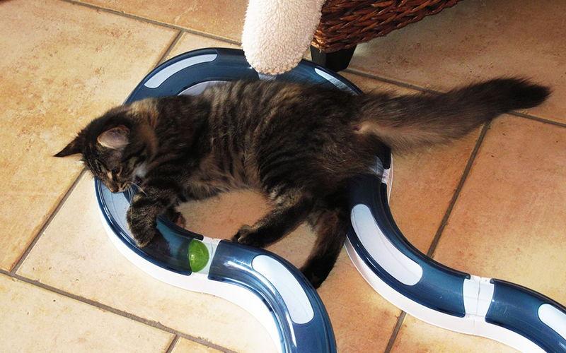 Interaktywne zabawki dla kotów