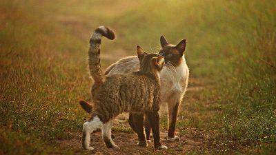 Rytuały powitalne kotów