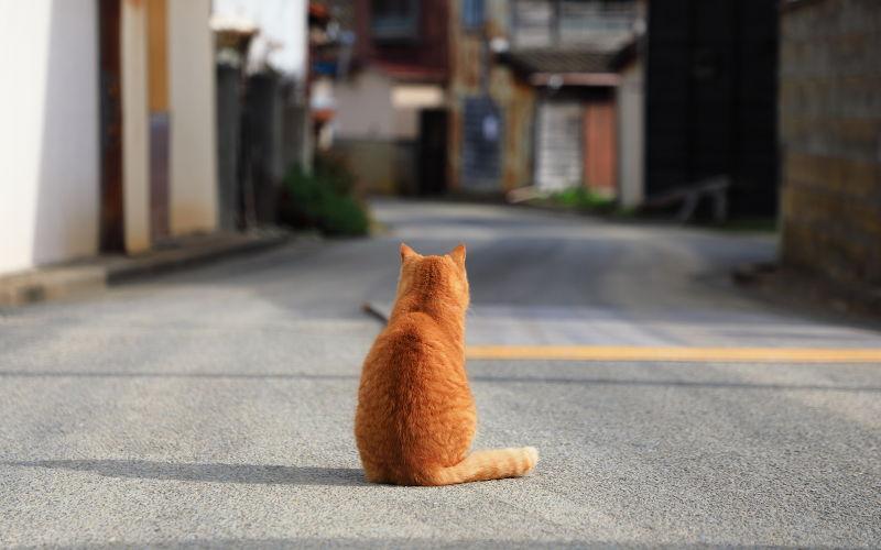 Tashirojima – Koci Raj