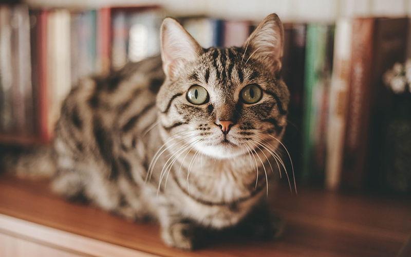 Otwarte kuwety dla kotów