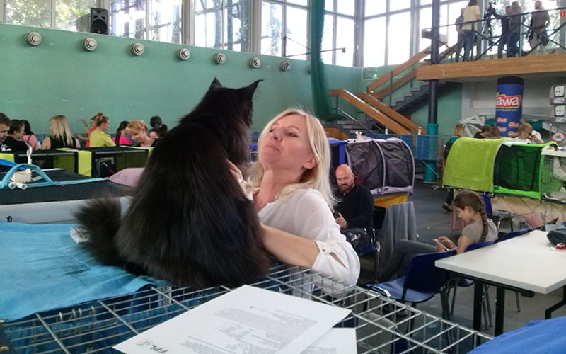 LVIII iLIX Międzynarodowa Wystawa Kotów Rasowych Jedynki wWarszawie, Wrzesień 2019