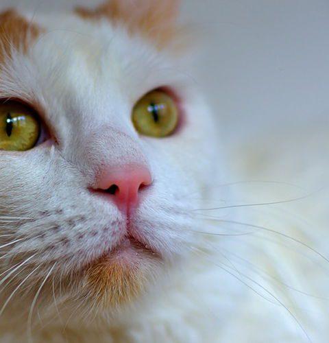 Zamknięte kuwety dla kotów