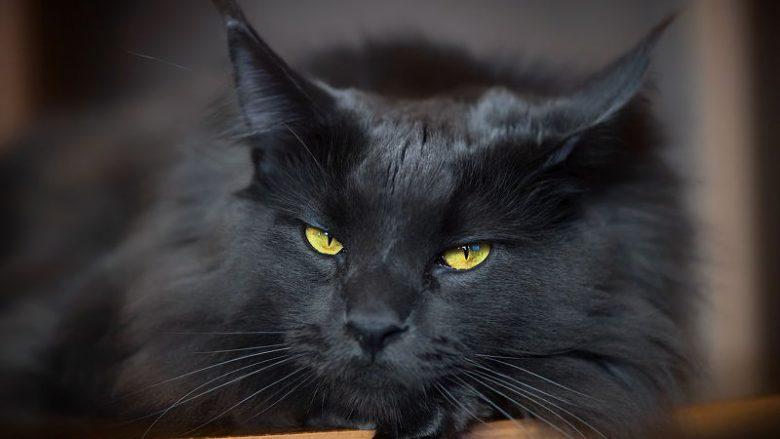 Najpiękniejsze umaszczenia u kotów – moja lista