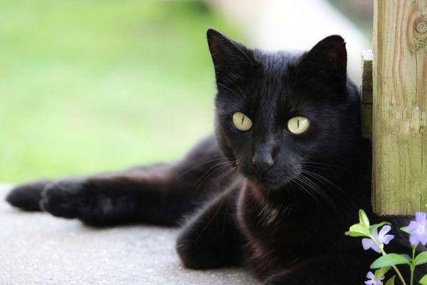 Najpiękniejsze umaszczenia ukotów - czarne.