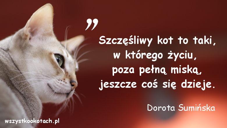 Cytaty o kotach – Dorota Sumińska