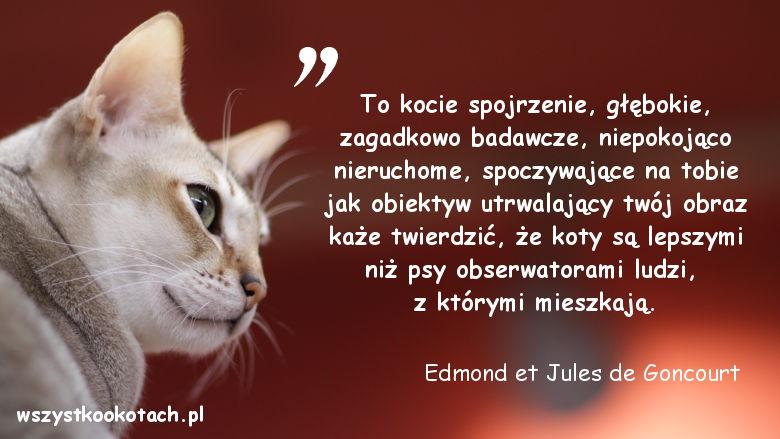 Cytaty o kotach – Edmond et Jules de Goncourt