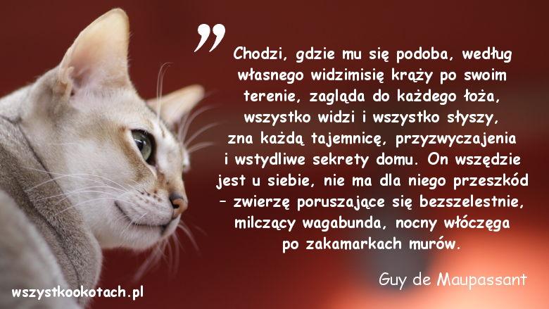Cytaty o kotach - Guy de Maupassant