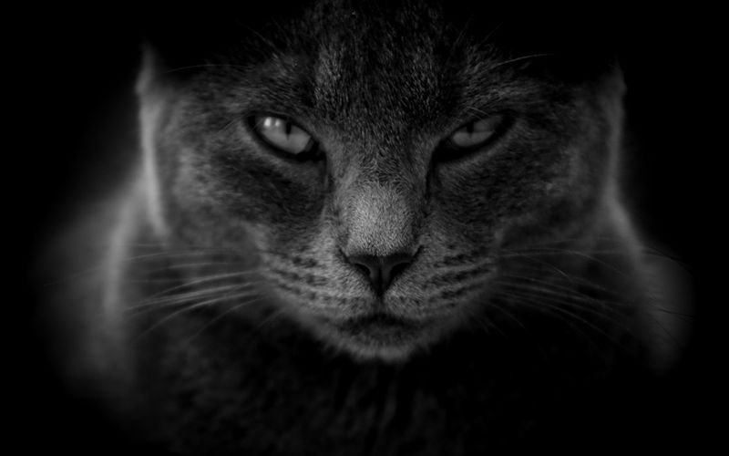 Garść przesądów o kotach na Halloween