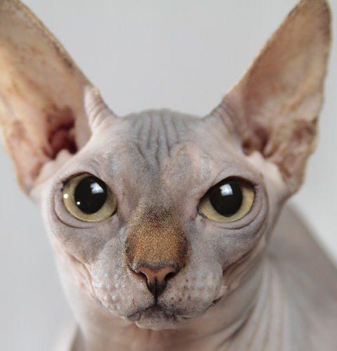 Jaką wybrać łopatkę do sprzątania kuwety dla kota?