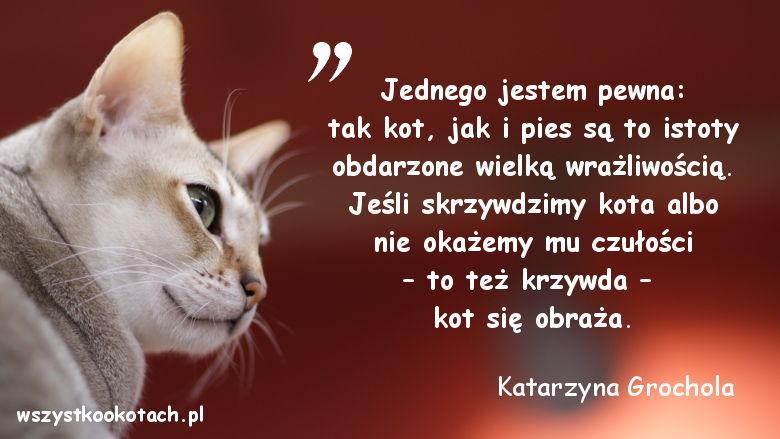 Cytaty o kotach - Katarzyna Grochola