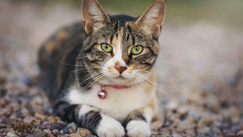 Jaką obrożę kupić kotu?