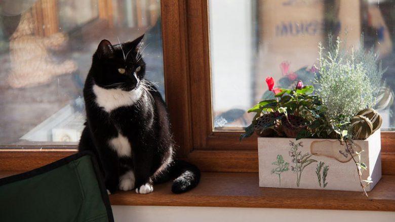 Jakiego kota wybrać do małego mieszkania?