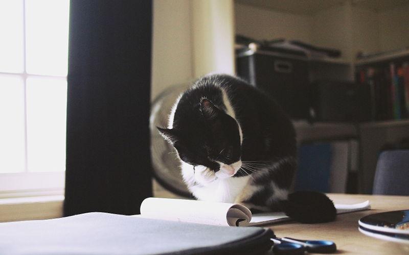 Dlaczego kot zrzuca rzeczy ze stołu?