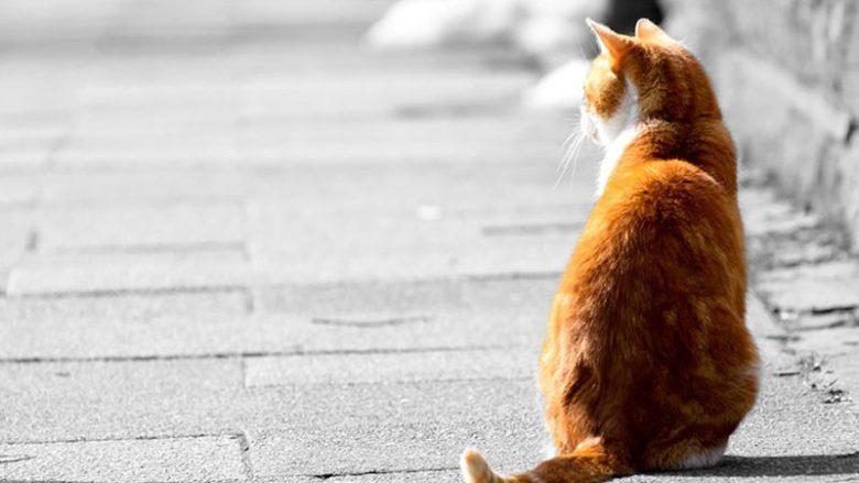 Dlaczego koty uciekają z domu?