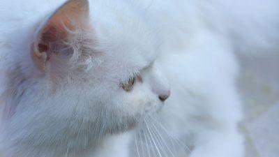 Ekologiczne żwirki dla kotów. Czyli jakie?
