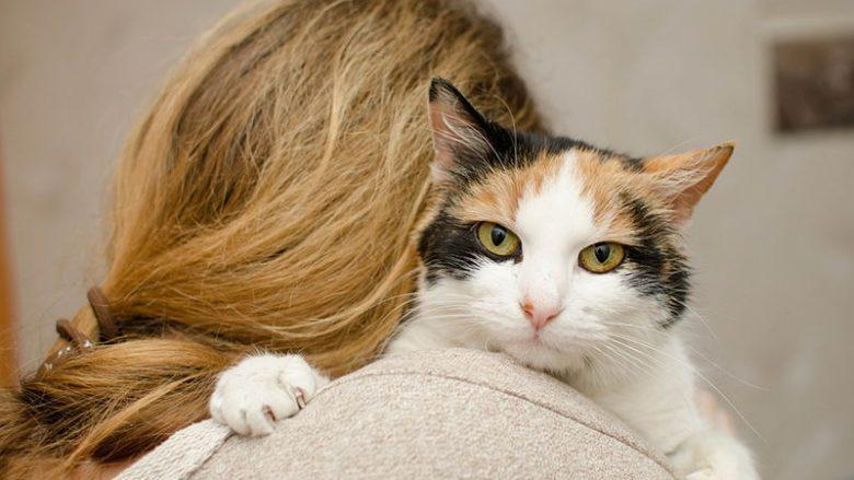 Jak kot okazuje miłość?