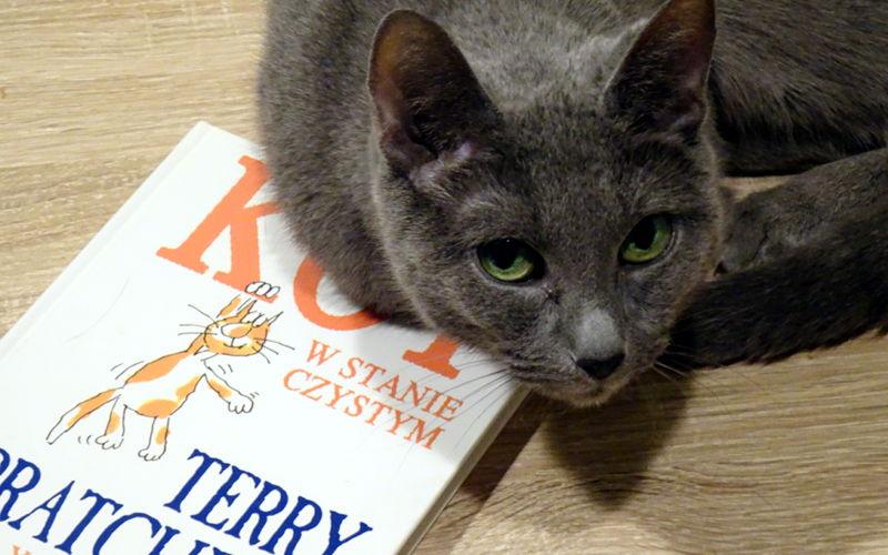 """Terry Pratchett, Gray Jolliffe """"Kot w stanie czystym"""" – O kotach z przymrużeniem oka"""