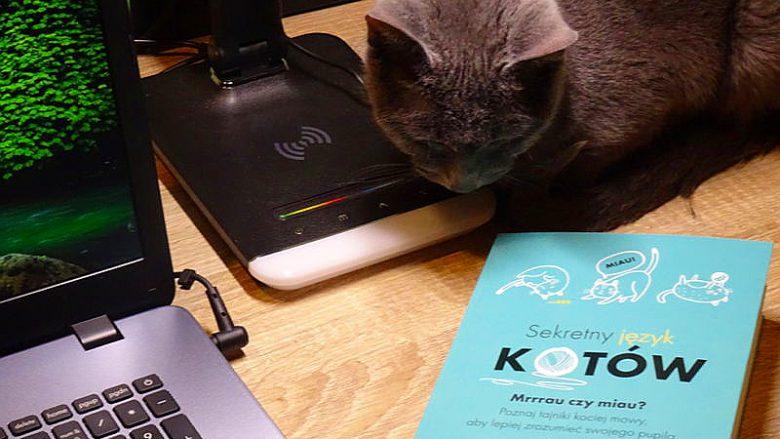 """""""Sekretny język kotów"""" – Książka, która pomoże nam zrozumieć mruczącego przyjaciela"""