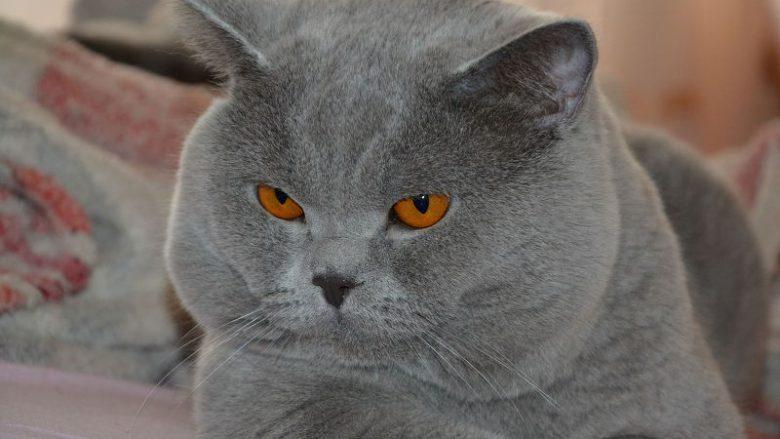 Co to są naturalne rasy kotów?