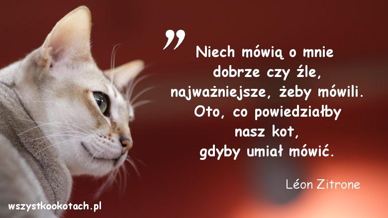 Cytaty o kotach – Léon Zitrone