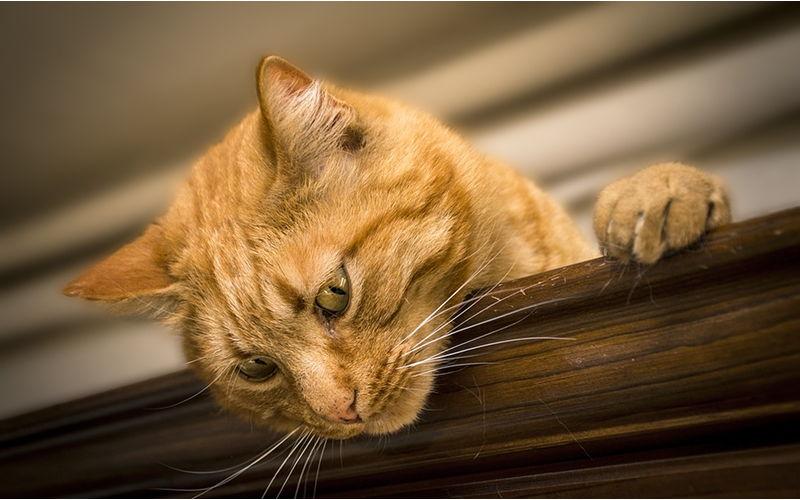 Gdzie wyrzucać żwirek dla kota?