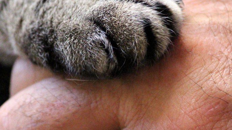 Adopcja kota – Co musimy wiedzieć?