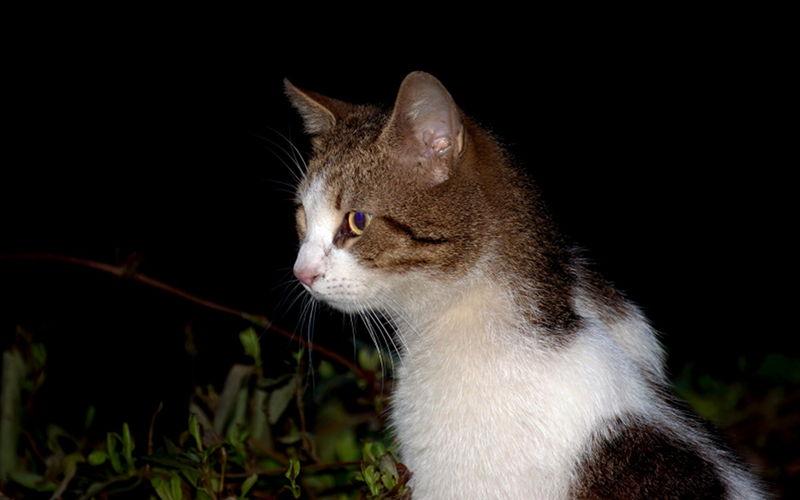Dlaczego kot nie śpi w nocy?