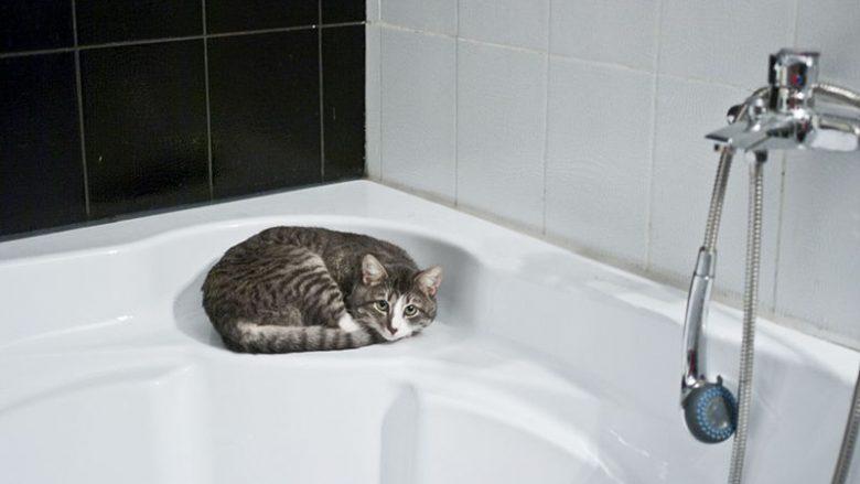 Dlaczego koty śpią w dziwnych miejscach?