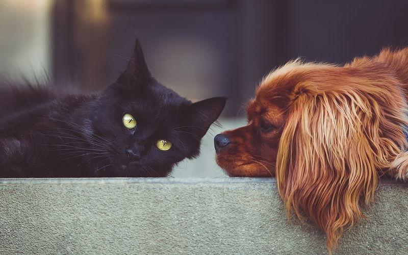 Kot vs. pies - Część 1