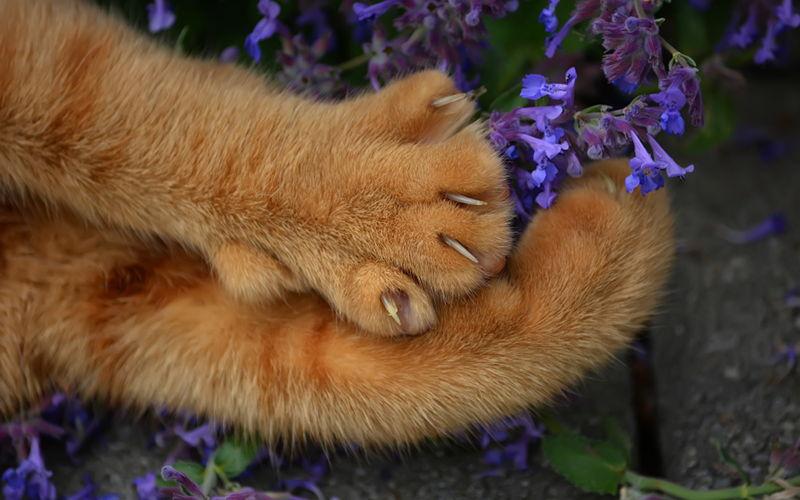 Czy kotu trzeba obcinać pazury?