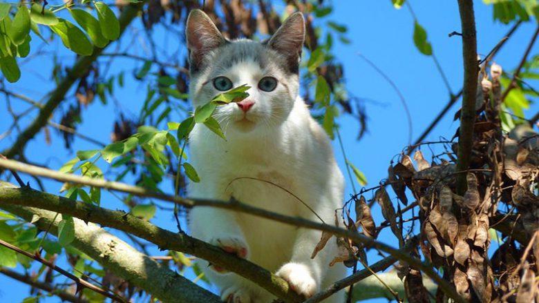 Dlaczego koty wchodzą na drzewa?