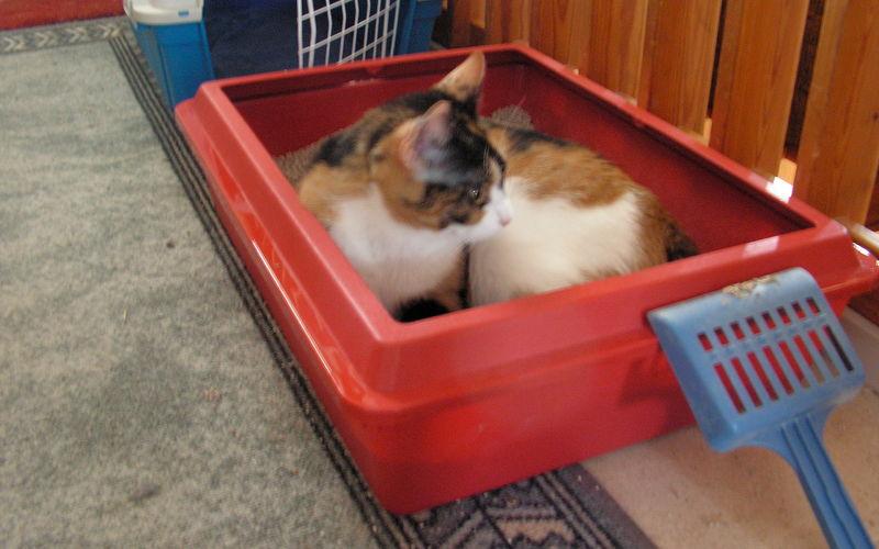 Jak sprzątać kuwetę dla kota?