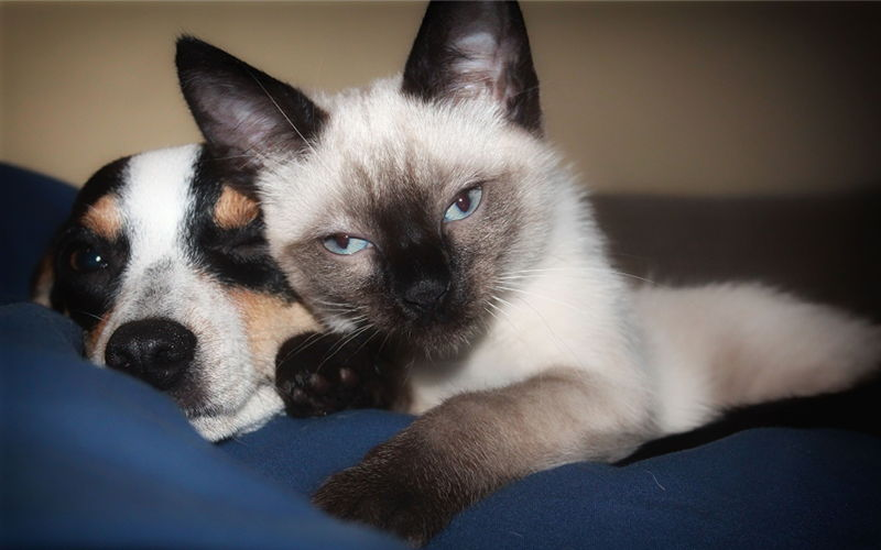 Kot vs pies - Część 2