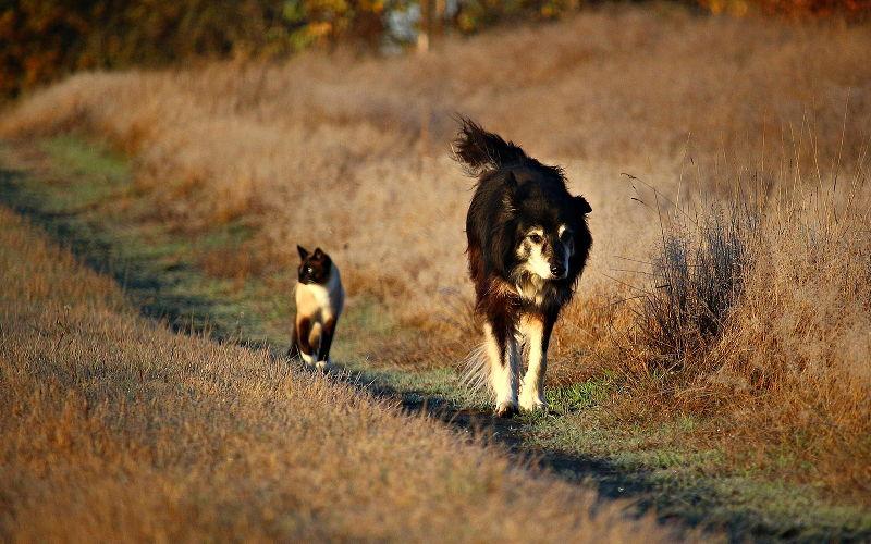 Koty i psy - bardzo dalecy krewni