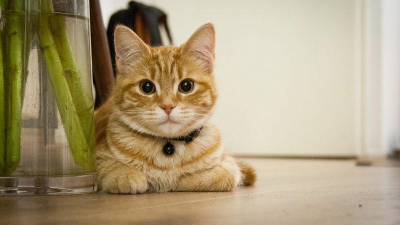 Szelki czy obroża dla kota?