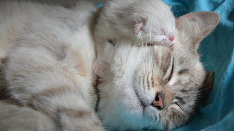 Zachowanie kotki podczas porodu