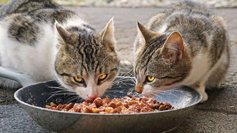 Żywienie kotów dorosłych