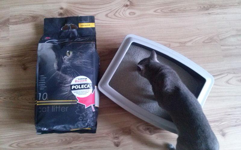 Bentonitowy żwirek Canadian Cat dla kotów