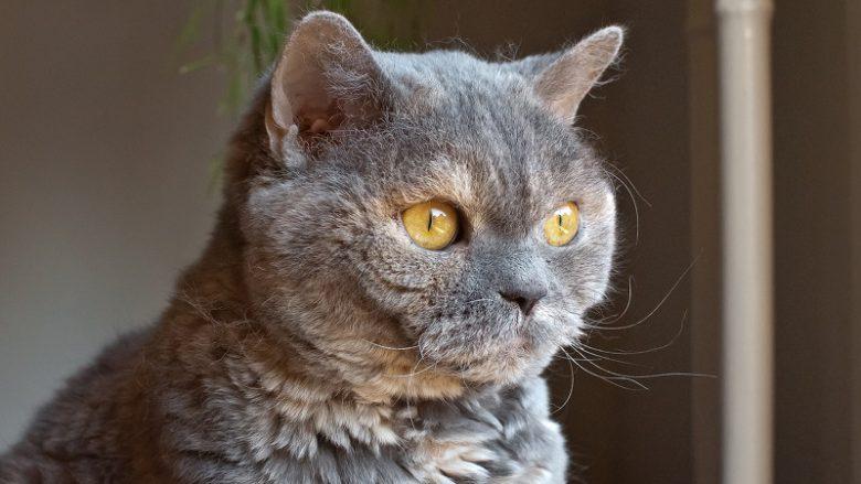Czy koty widzą duchy?