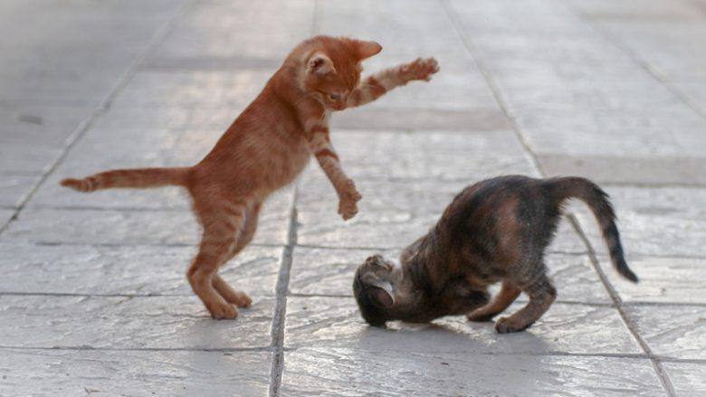 Kocie zabawy – W co i dlaczego bawią się koty?