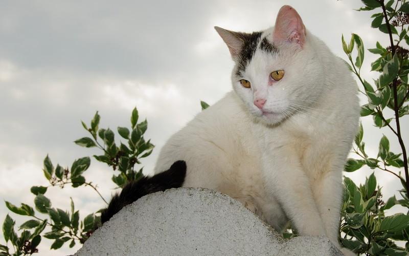 Toksoplazmoza u kotów