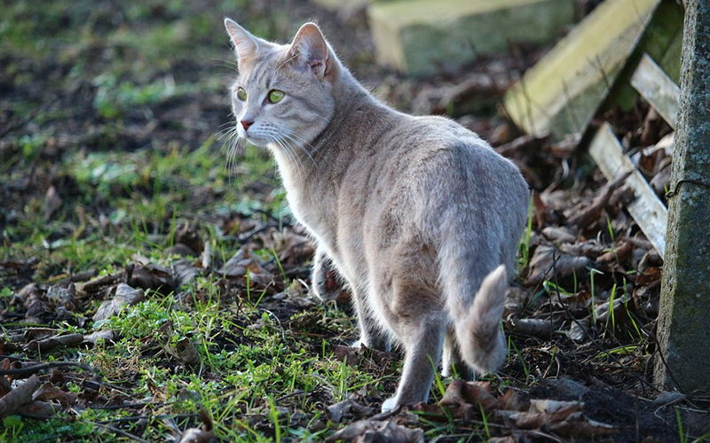 Czy kot może być wegetarianinem?