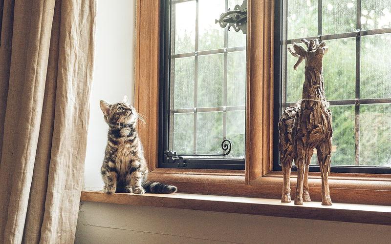 Koci mocz – Czy w domu, w którym jest kot, musi brzydko pachnieć?