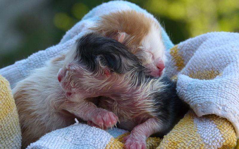Poród u kotów