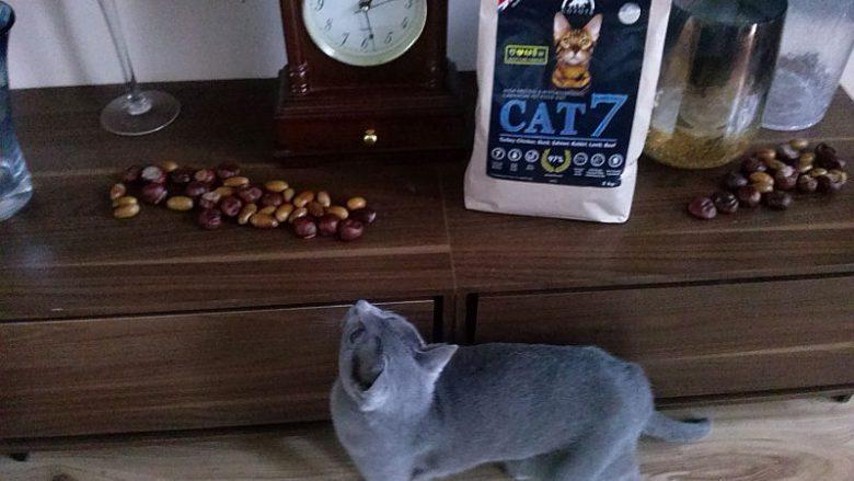 Sucha karma Coyote Cat 7 dla kotów