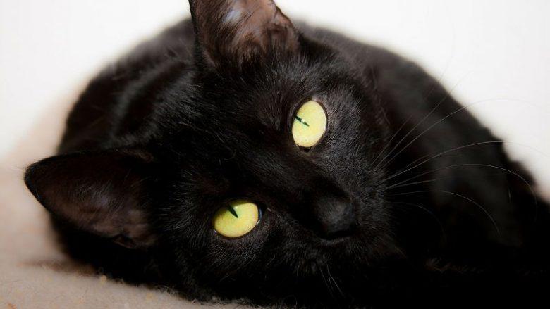 Żywienie kotów suchymi karmami dla kotów i mokrymi karmami dla kotów – porównanie