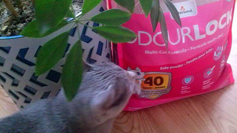 Bentonitowy żwirek Intersand OdourLock dla kotów
